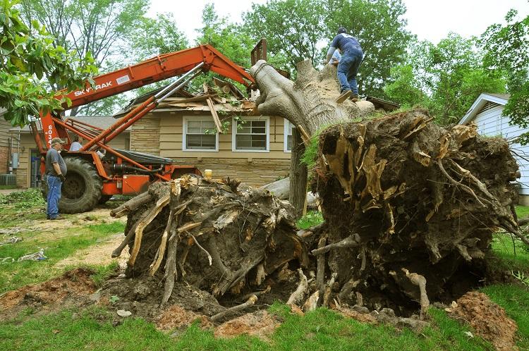 FEMA_-_44294_-_Damaged_Tree_removal_in_Oklahoma