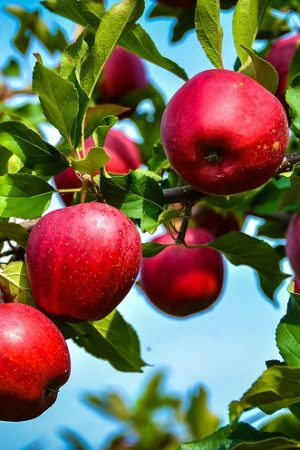 Apple Tree Supercolumn